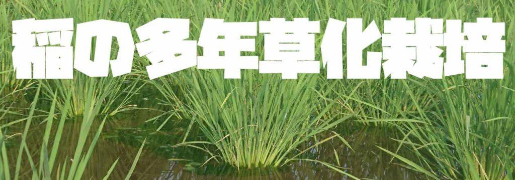 稲の多年草化